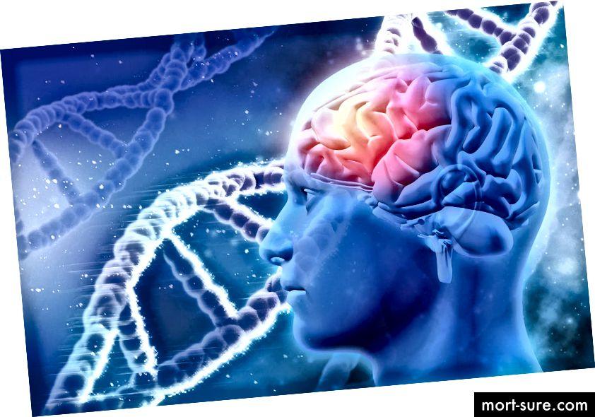 Das Gehirn weist einen grundlegenden Unterschied zwischen Menschen und Primaten auf