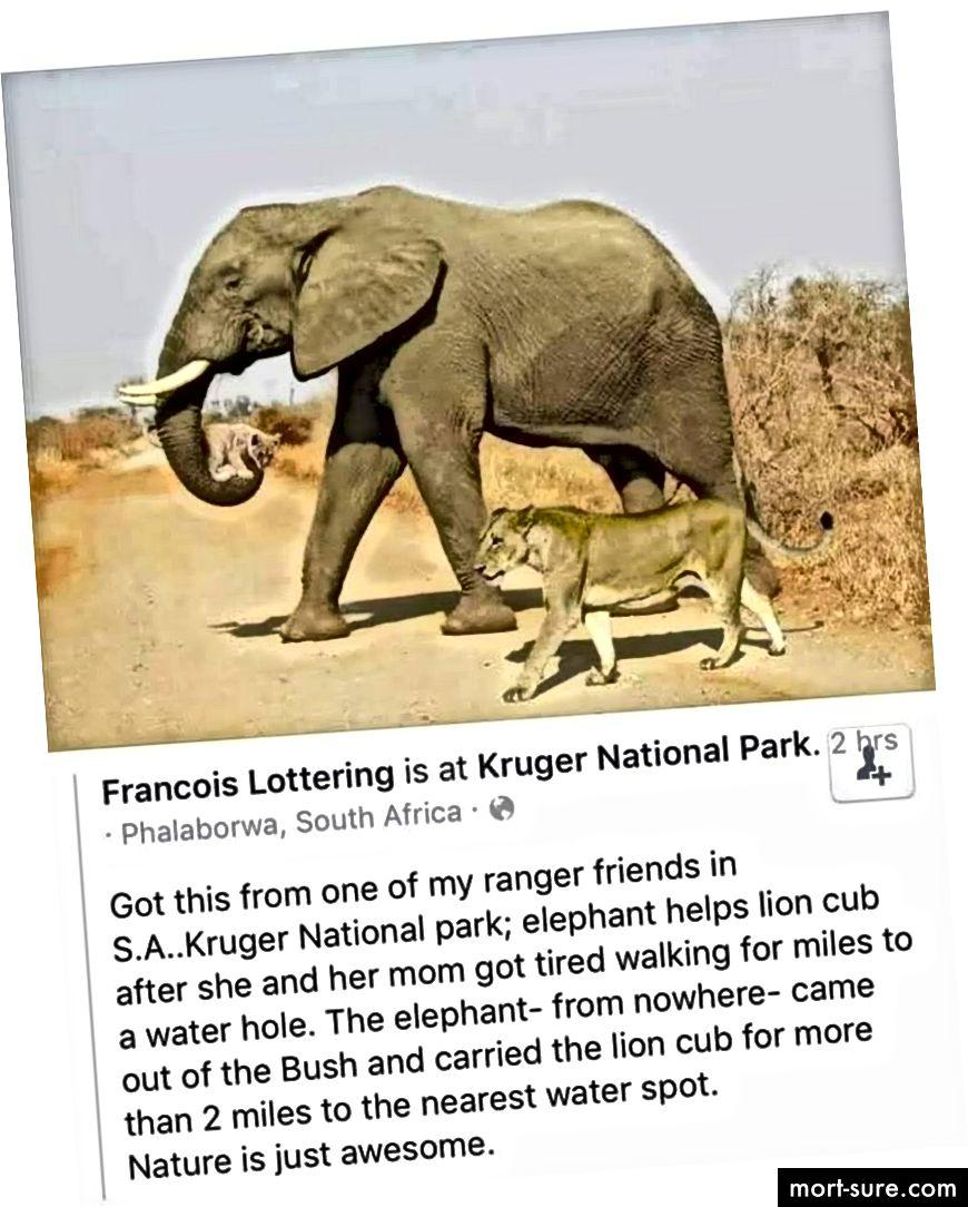 Metsikud loodusjõed - elevant kannab lõvikoera - Images.newindianexpress.com