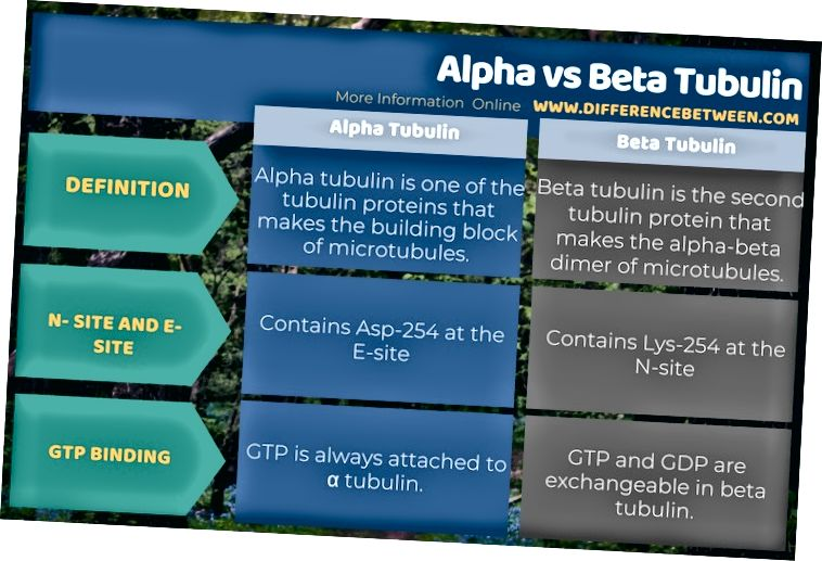 Alfa va Beta Tubulin o'rtasidagi farq jadval shaklida