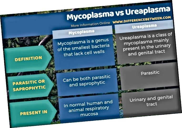 الفرق بين الميكوبلازما والبلازما في شكل جدولي