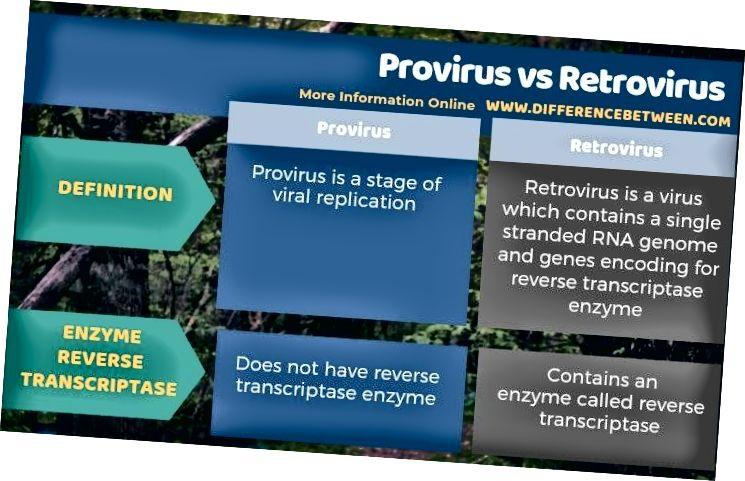 Разлика между провирус и ретровирус в таблична форма