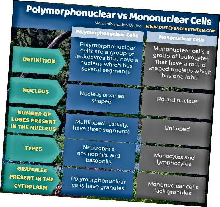 Jadval shaklida polimorfonukulyar va mononukulyar hujayralar o'rtasidagi farq