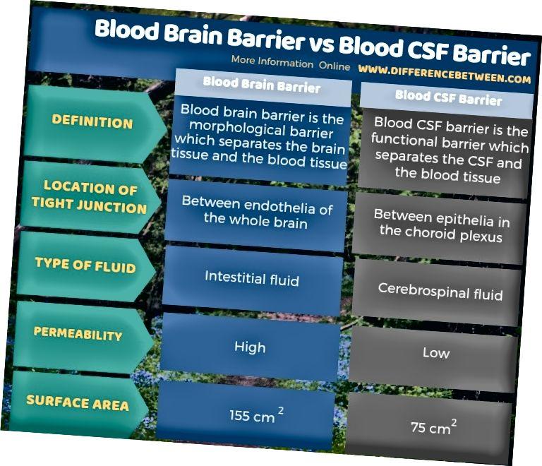 Разлика между кръвна мозъчна бариера и кръвна CSF бариера в таблична форма
