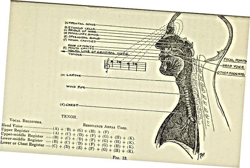 Sự khác biệt giữa giọng nói đầu và giọng nói ngực