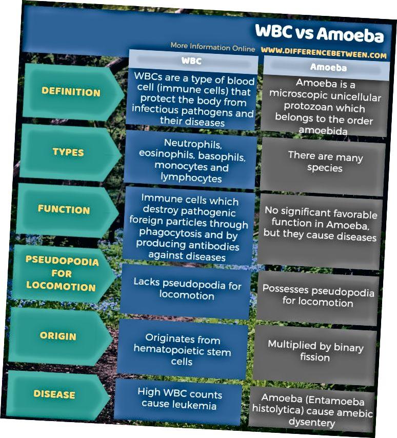 WBC va Amoeba o'rtasidagi farq tabular shaklida