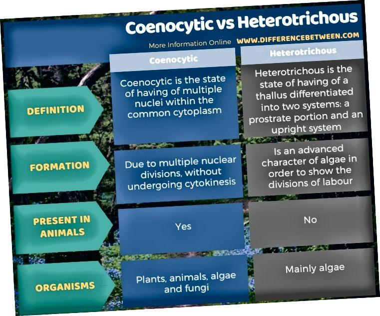 Разлика между Coenocytic и Heterotrichous в таблична форма