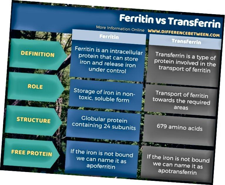 Feritino ir Transferrino skirtumas lentelės pavidalu