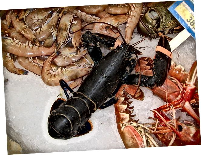 Moliuskai ir vėžiagyviai