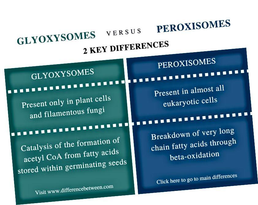 Glüoksüsoomide ja peroksisoomide erinevus - võrdluskokkuvõte
