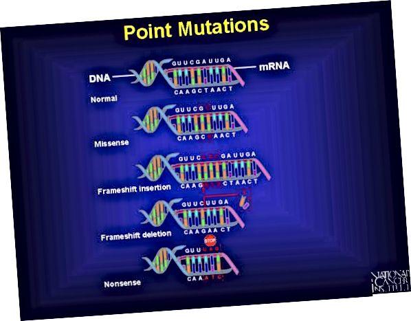 Mutatsiooni ja rekombinatsiooni erinevus