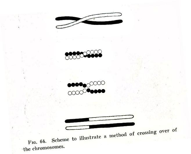 Mutatsioon vs rekombinatsioon