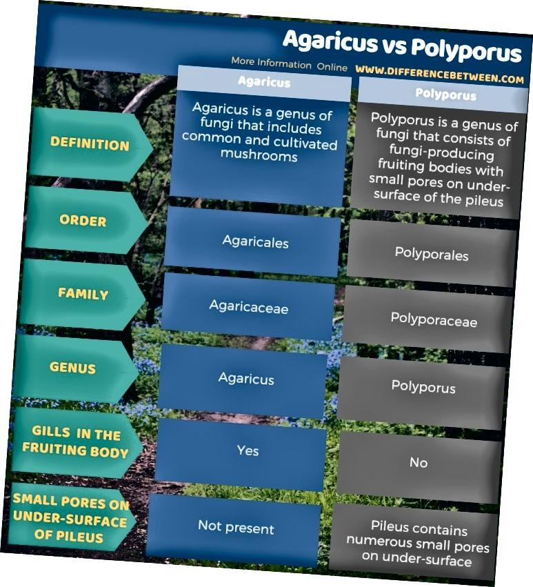 ההבדל בין אגאריקוס לפוליפורוס בצורה טבלאית