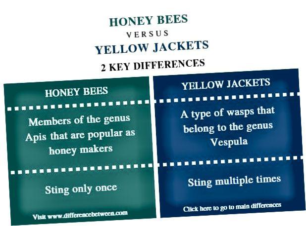 Rozdiel medzi včely medonosnými a žltými bundami - zhrnutie porovnania