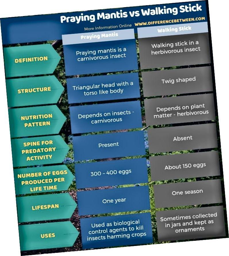 Erinevus palvetava Mantis ja kepikepi vahel - tabelvorm (1)