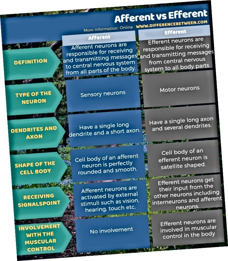 Unterschied zwischen afferent und efferent in tabellarischer Form