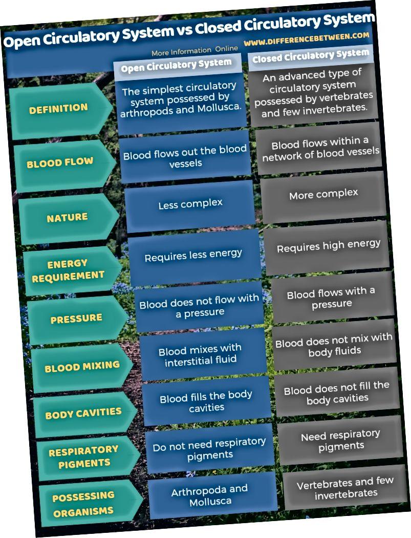الفرق بين نظام الدورة الدموية المفتوح ونظام الدورة الدموية المغلق في شكل جدول