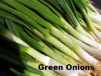 بصل أخضر   الفرق بين