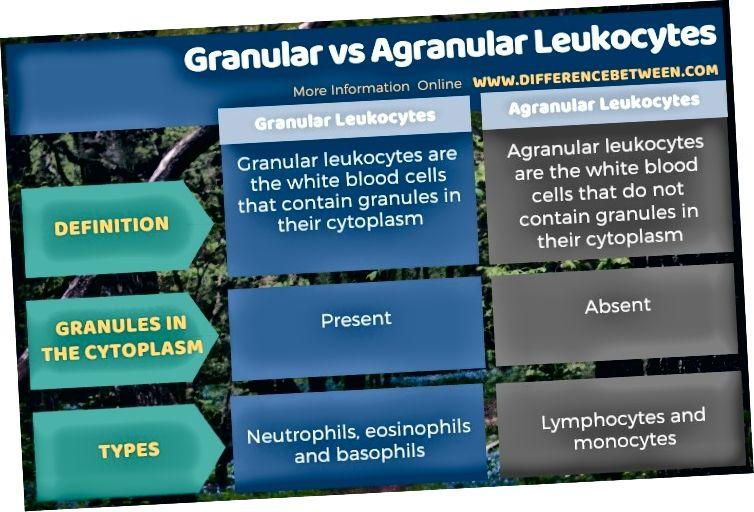 Graanulite ja agranulaarsete leukotsüütide erinevus tabelina
