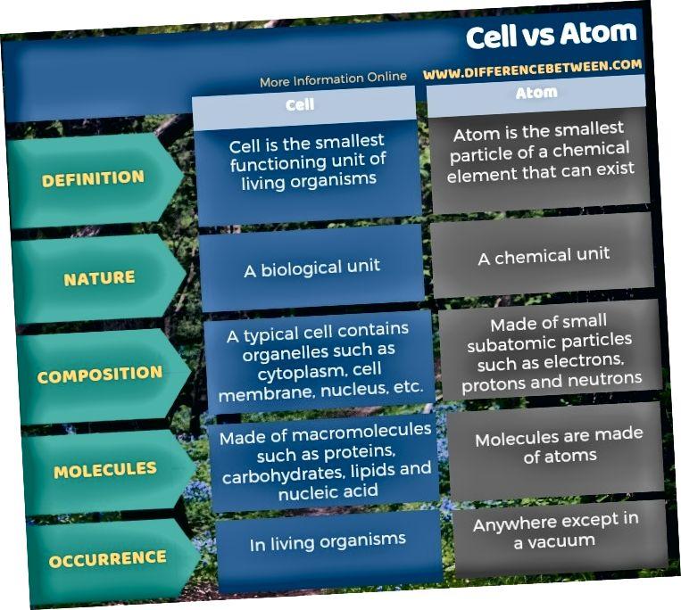 الفرق بين الخلية والذرة في شكل جدول