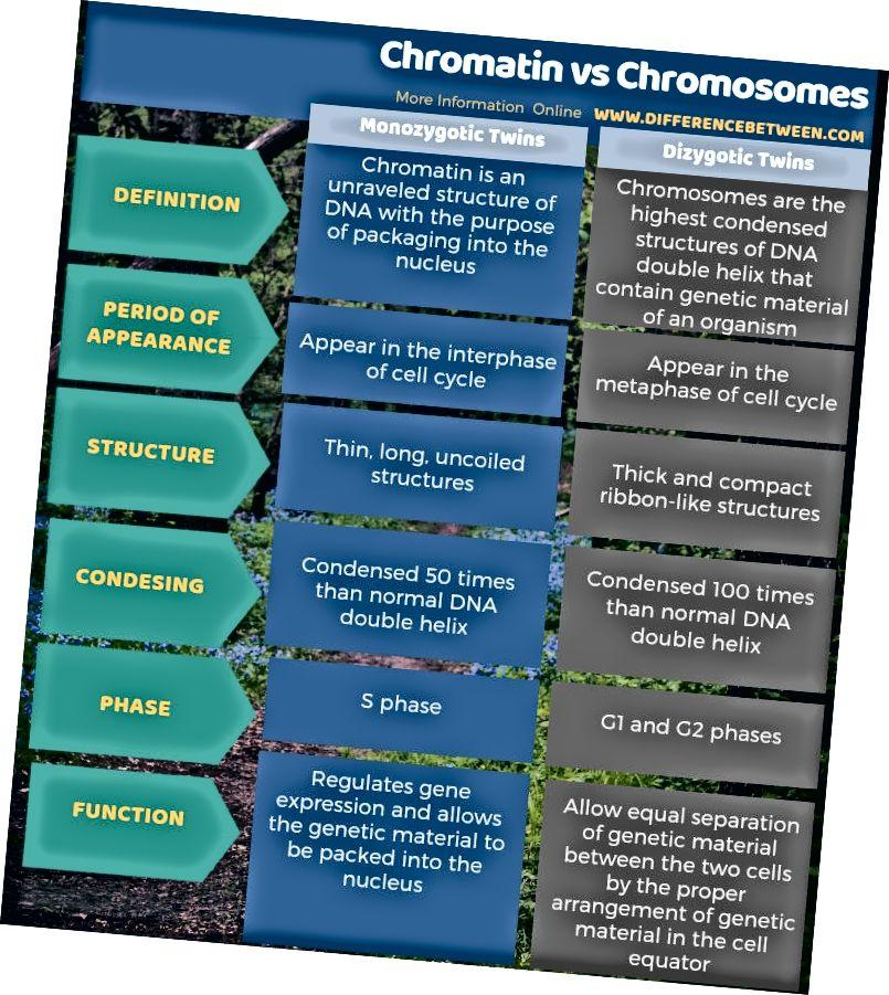 Разлика между хроматин и хромозоми - таблична форма