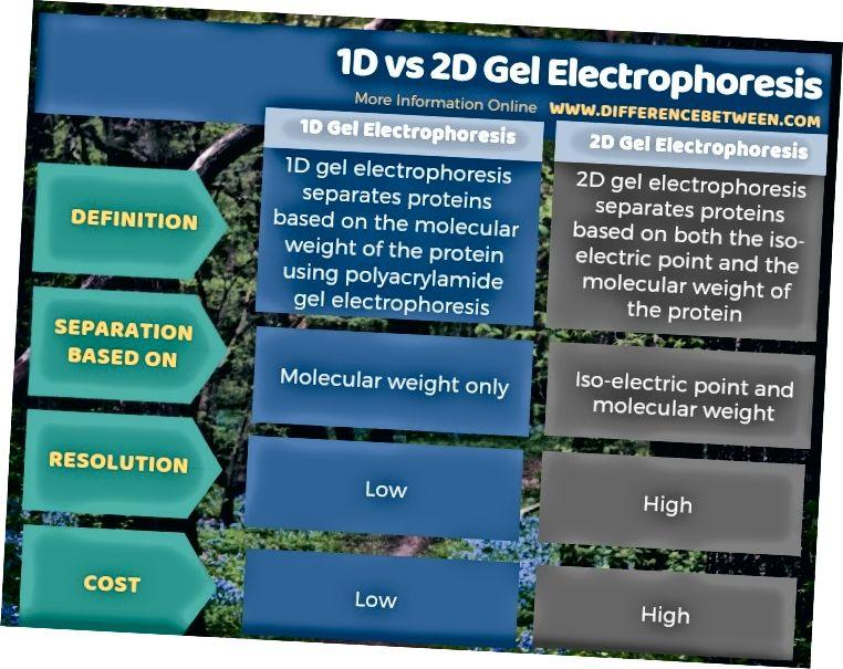 Razlika med 1D in 2D gelo elektroforezo v tabeli