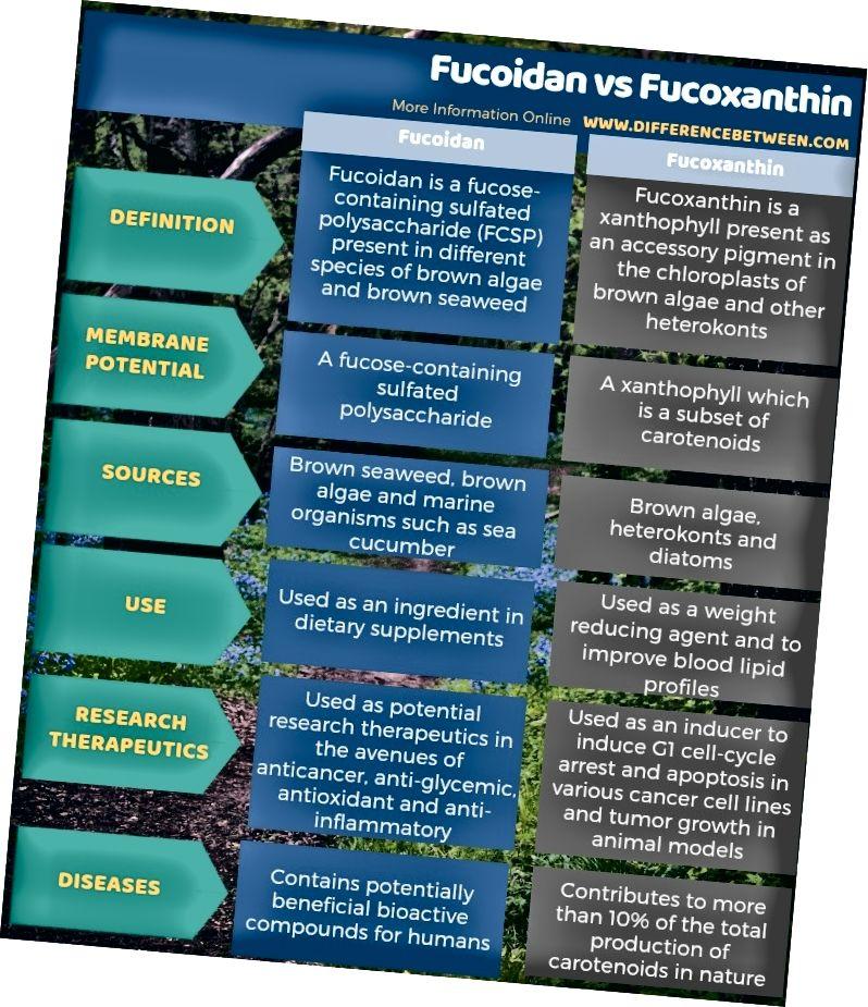 Atšķirība starp fukoidīnu un fukoksantīnu tabulas formā