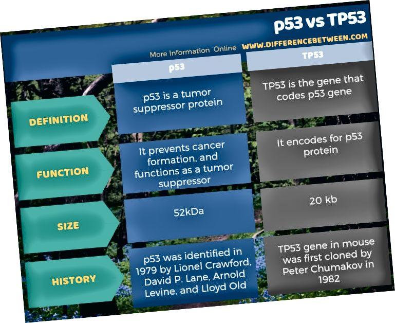 الفرق بين p53 و TP53 في شكل جدول
