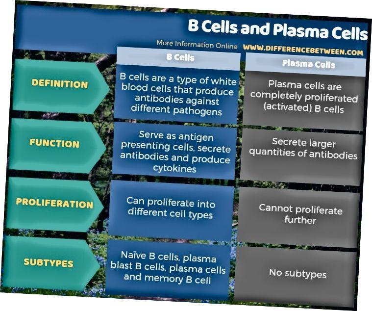 الفرق بين خلايا B وخلايا البلازما - شكل جدولي