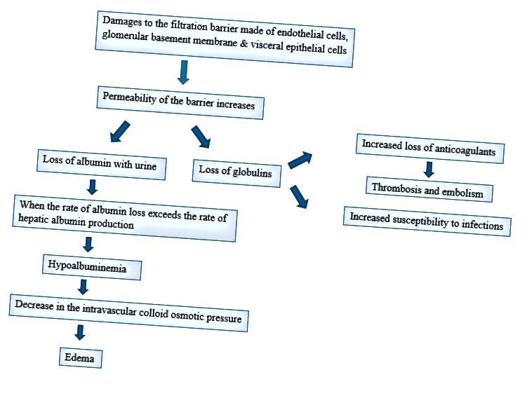 Razlika med glomerulonefritisom in Nefrotičnim sindromom - 3