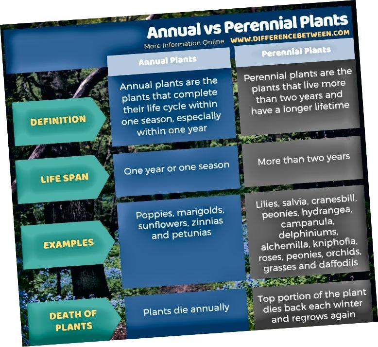 Διαφορά μεταξύ ετησίων και πολυετών φυτών - Πίνακας με μορφή