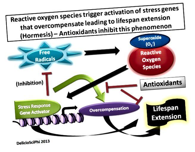 الفرق الرئيسي - مضادات الأكسدة مقابل المواد الكيميائية النباتية