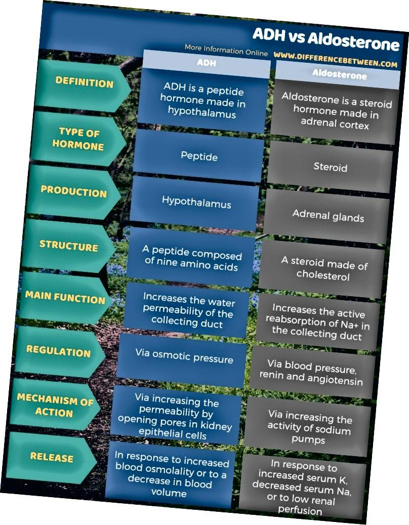 सारणीबद्ध रूप में एडीएच और एल्डोस्टेरोन के बीच अंतर
