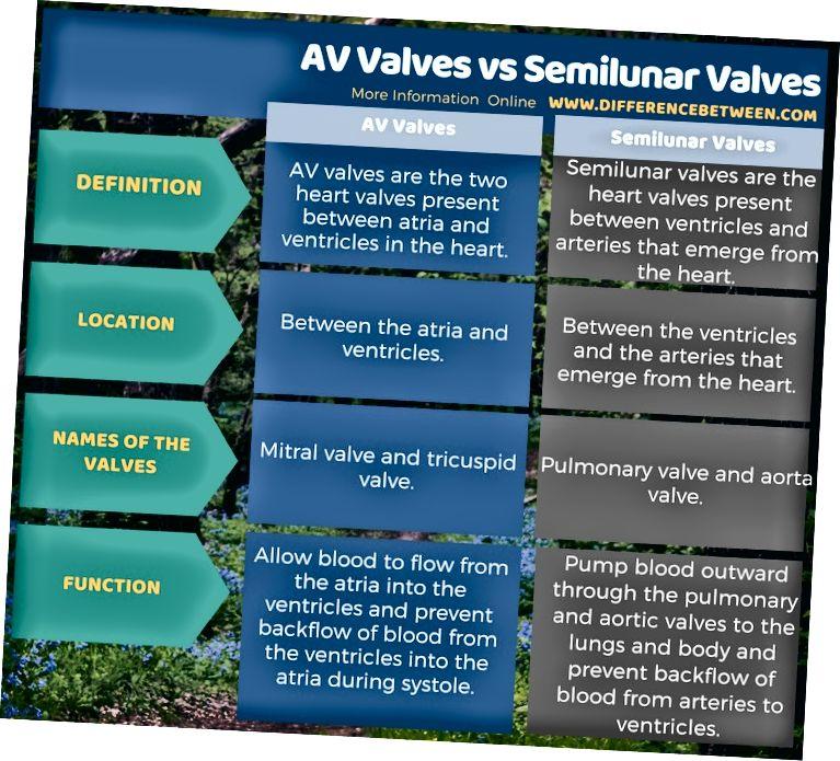 Разлика между AV клапани и Semilunar клапани в таблична форма