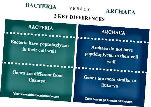 Διαφορά μεταξύ βακτηρίων και Archaea_ Σύγκριση Περίληψη