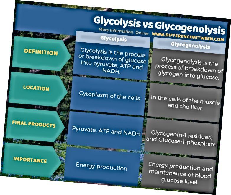 Glikolīzes un glikogenolīzes atšķirība tabulas formā