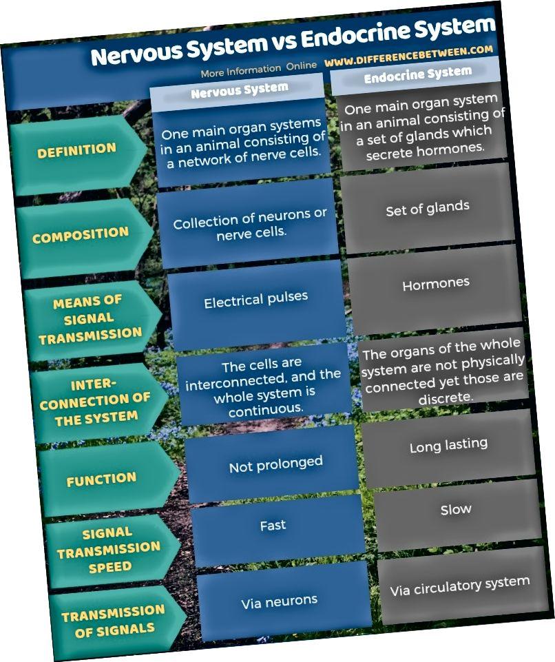 الفرق بين الجهاز العصبي ونظام الغدد الصماء في شكل جدول
