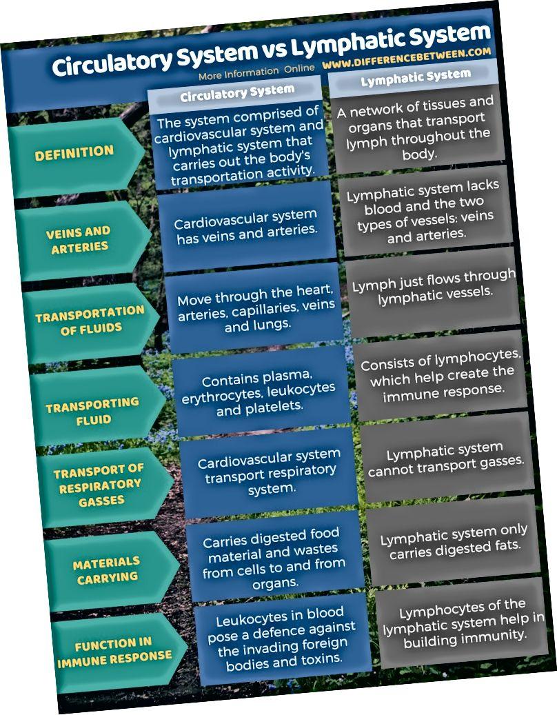 Rozdíl mezi oběhovým systémem a lymfatickým systémem v tabulkové formě