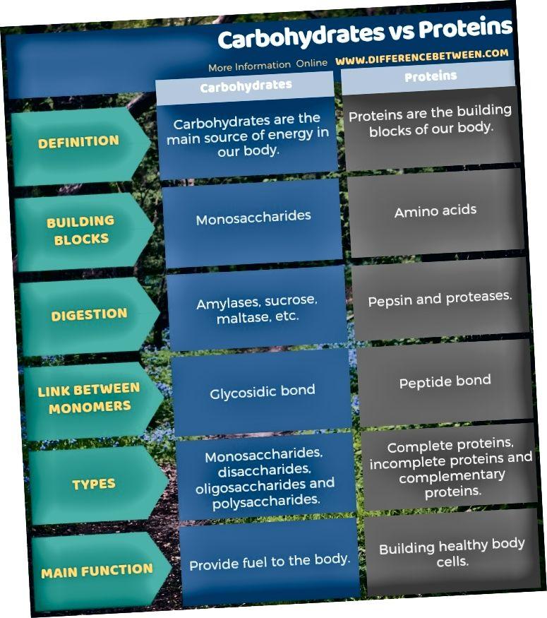 الفرق بين الكربوهيدرات والبروتينات في شكل جدول