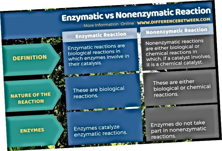 Perbezaan Antara Reaksi Enzimatik dan Nonenzimatik dalam Borang Tabular