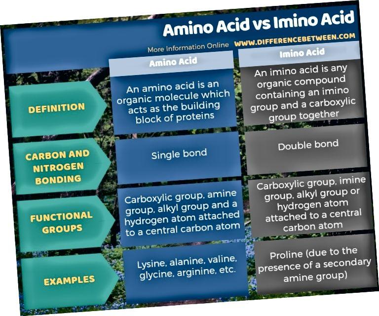 Διαφορά μεταξύ αμινοξέος και ιμινοξέος σε πίνακα