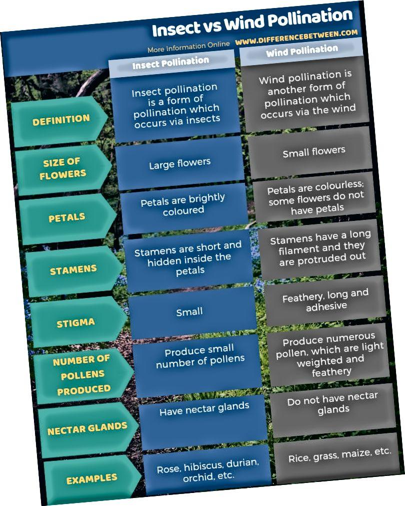 Skirtumas tarp vabzdžių ir vėjo apdulkinimo lentelės pavidalu