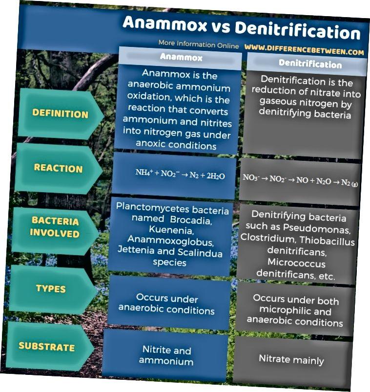 Atšķirība starp Anammox un denitrifikāciju tabulas formā