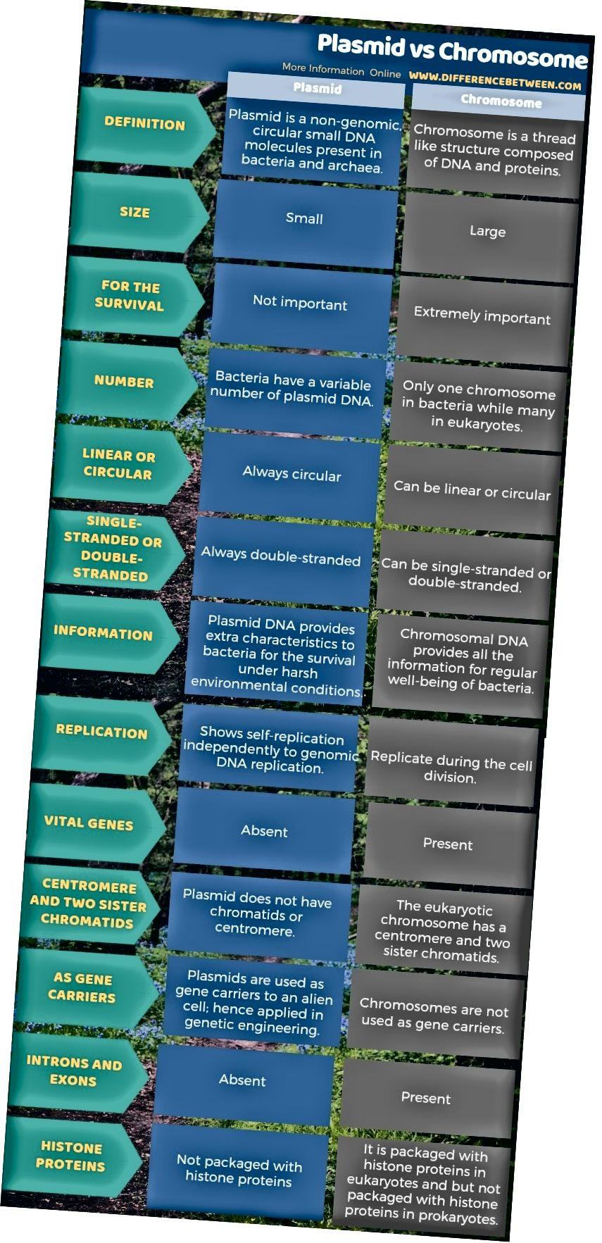 Unterschied zwischen Plasmid und Chromosom in tabellarischer Form
