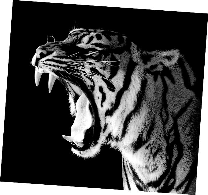 تفاوت بین دندانهای Herbivores و Carnivores