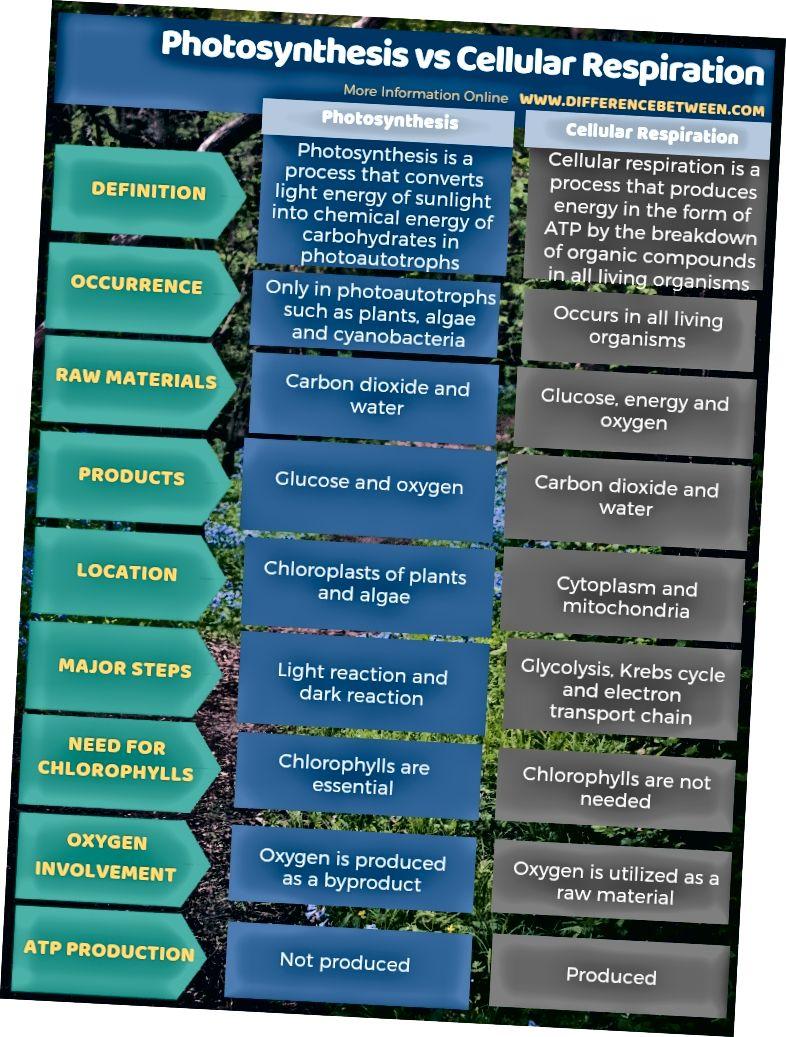 الفرق بين التمثيل الضوئي والتنفس الخلوي - شكل جدولي