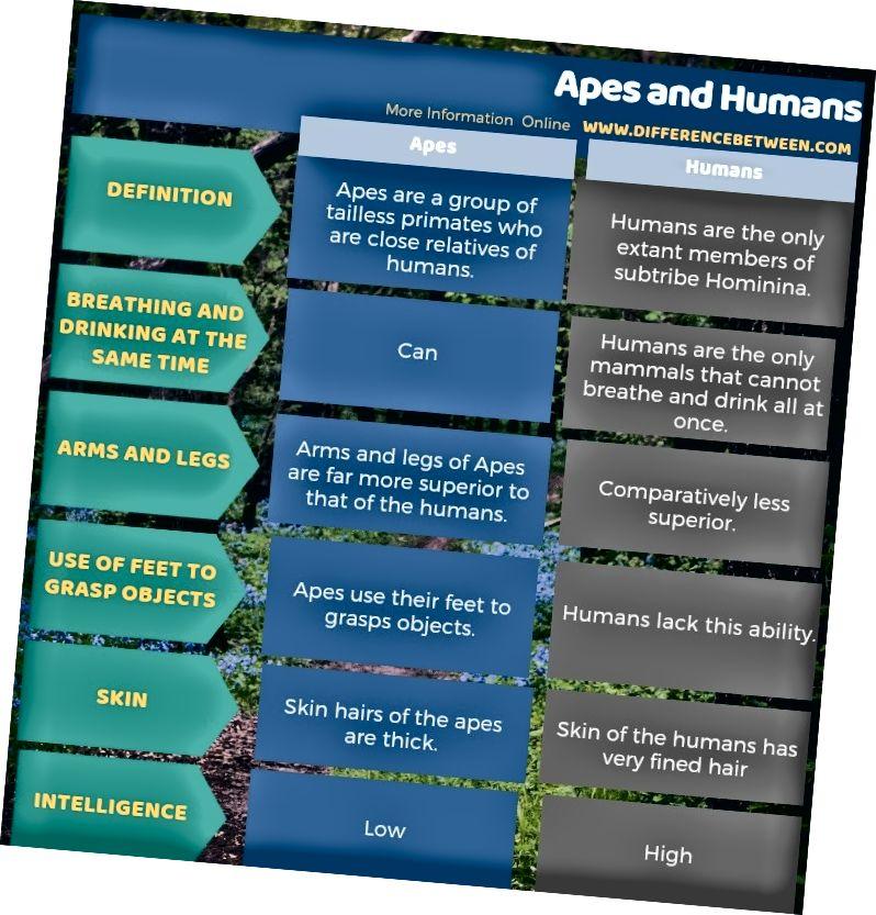 Διαφορά μεταξύ των πιθήκων και του ανθρώπου σε πίνακα