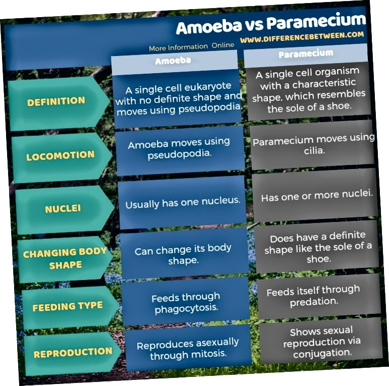 Amoeba va Paramecium o'rtasidagi farq tabular shaklida