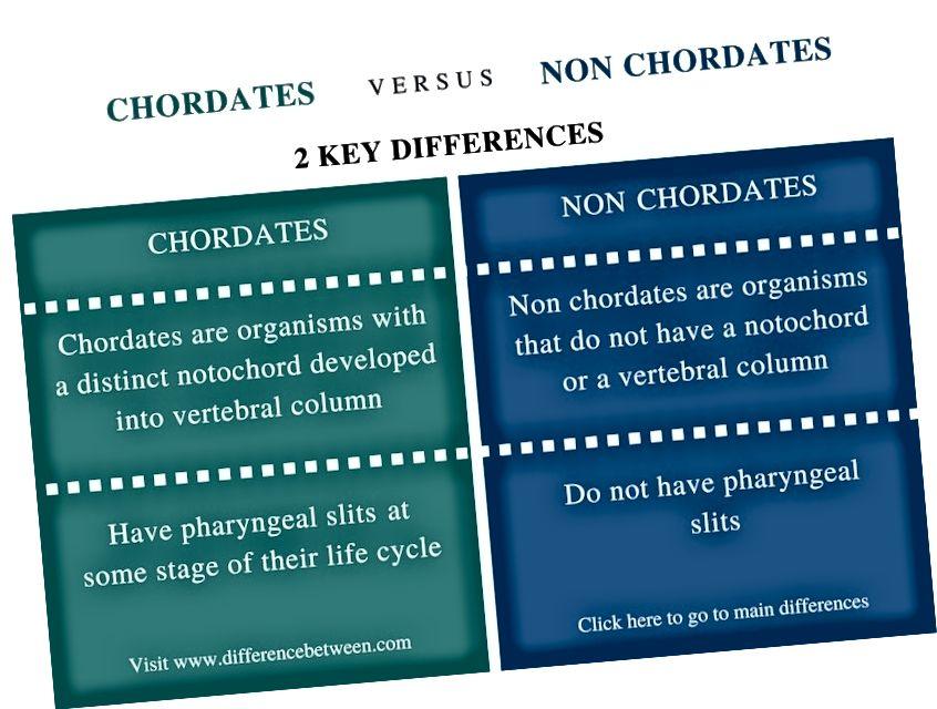 Разлика между хордатите и нехордатите - обобщение на сравнението