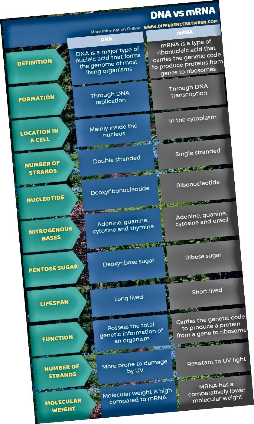 DNA ja mRNA erinevus - tabelivorm