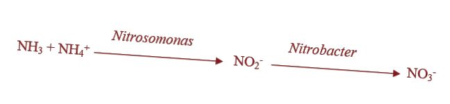 ההבדל בין nitrification לבין denitrification - 3